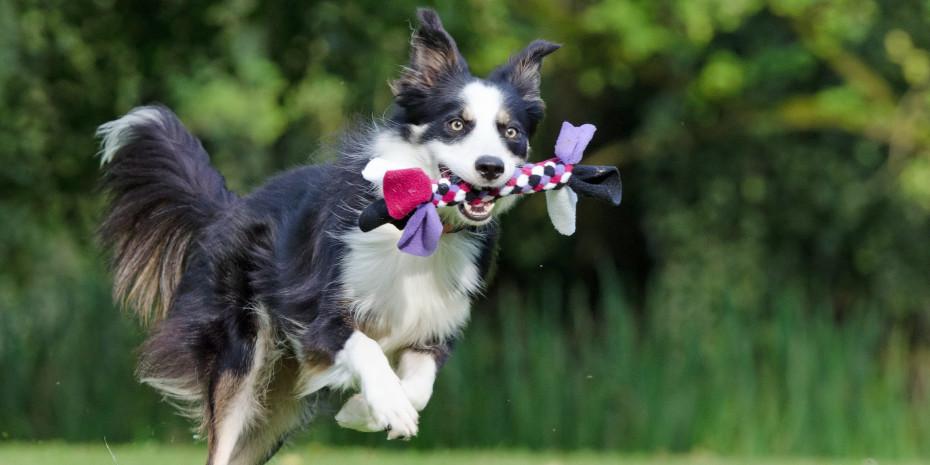 Toben und Spielen hält den Hund (wie auch die Katze) gesund.