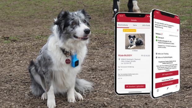 Mit dem GPS-Tracker können Tierbesitzer in Echtzeit sehen, wo ihr Hund gerade ist.