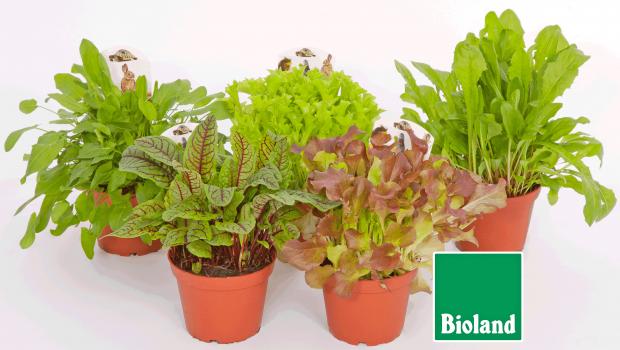 Futterpflanzen Bio, PetSnack-Futterpflanzen , Fleischle Gartenbau