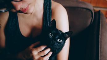 Royal Canin will Katzenbesitzer sensibilisieren