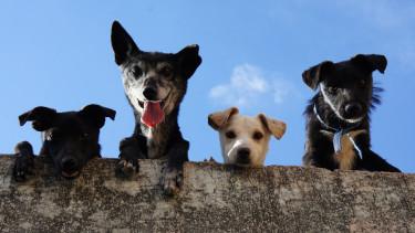 380 Mio. Euro Hundesteuer