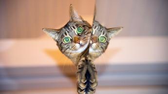 Katzennahrung - Der Fachhandel braucht neue