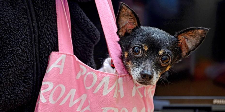 Futter für Hunde. Foto: Mike Foster, Pixabay