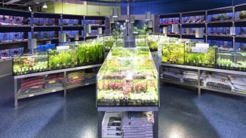 Die Aquaristik boomt wieder