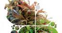Aquarienpflanzen aus Leidenschaft