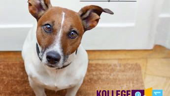 Deutscher Tierschutzbund ruft Aktionstag aus