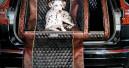 Mitfahrer Hund lebt oft gefährlich