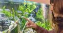 Aquaristik ist umweltfreundlich