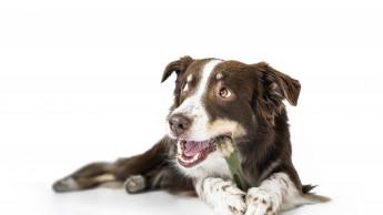 Kampagne für mehr Zahnpflege bei Hunden