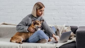 Neue Online-Seminare der Heimtier-Akademie