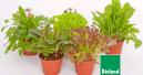Futterpflanzen: Bio, natürlich
