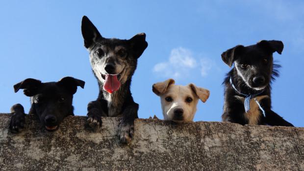Die öffentlichen Kassen haben im vergangenen Jahr rund 380 Mio. Euro aus der Hundesteuer eingenommen.